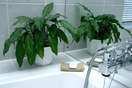 1606_1427356354-383848559__room-4-bathroom-2.jpg