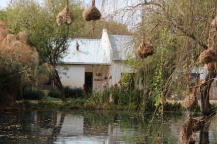 Cape Town Self Catering Accommodation - Olive Thrush Cottage