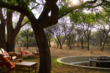 Cape Town Self Catering Accommodation - Foreva Wild