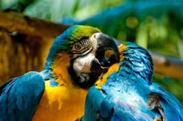 World of Birds Sanctuary