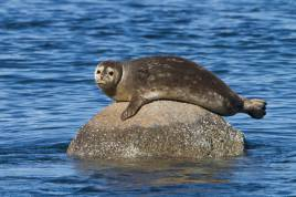Harbour Seal Cruise